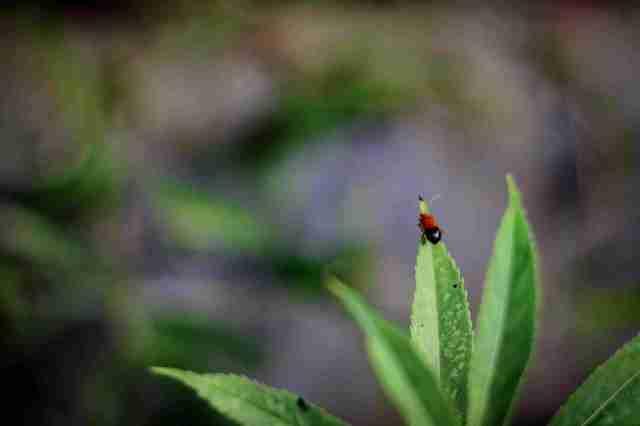 Ladybug_1.1.1_OktovinaButarbutar
